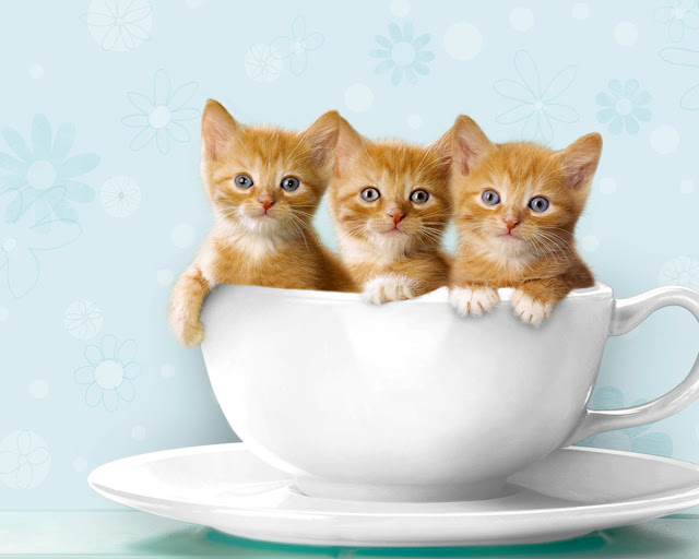 cats in cup