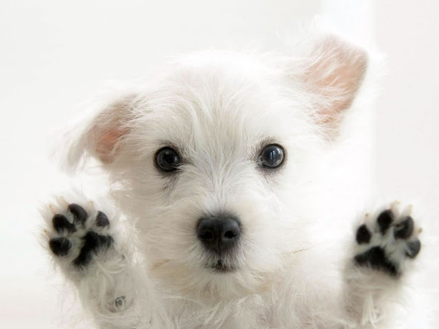 puppy with beautiful paws