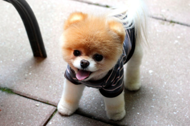 cute-dog-wallpapers-05