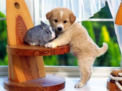 puppy with rabbit