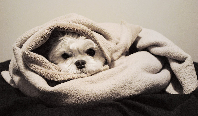 cute dog in towel