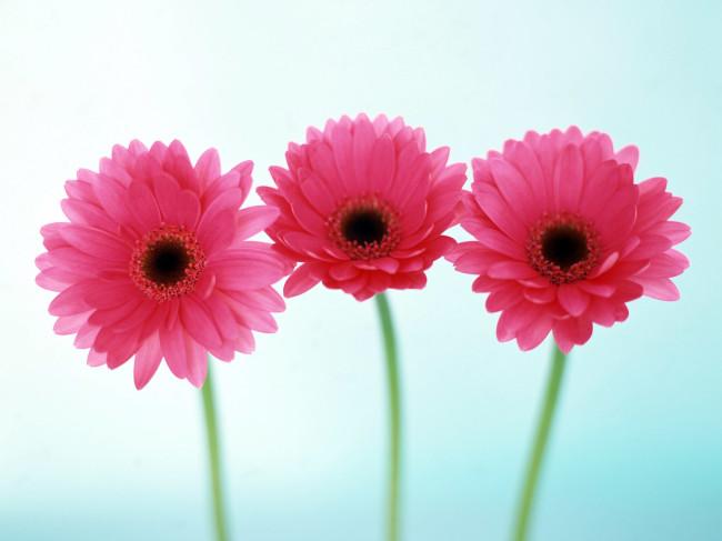 pink-refreshing-flowers