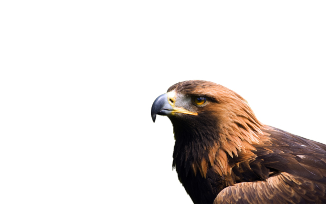 American Bald Eagle Wallpapers Classic Eagles